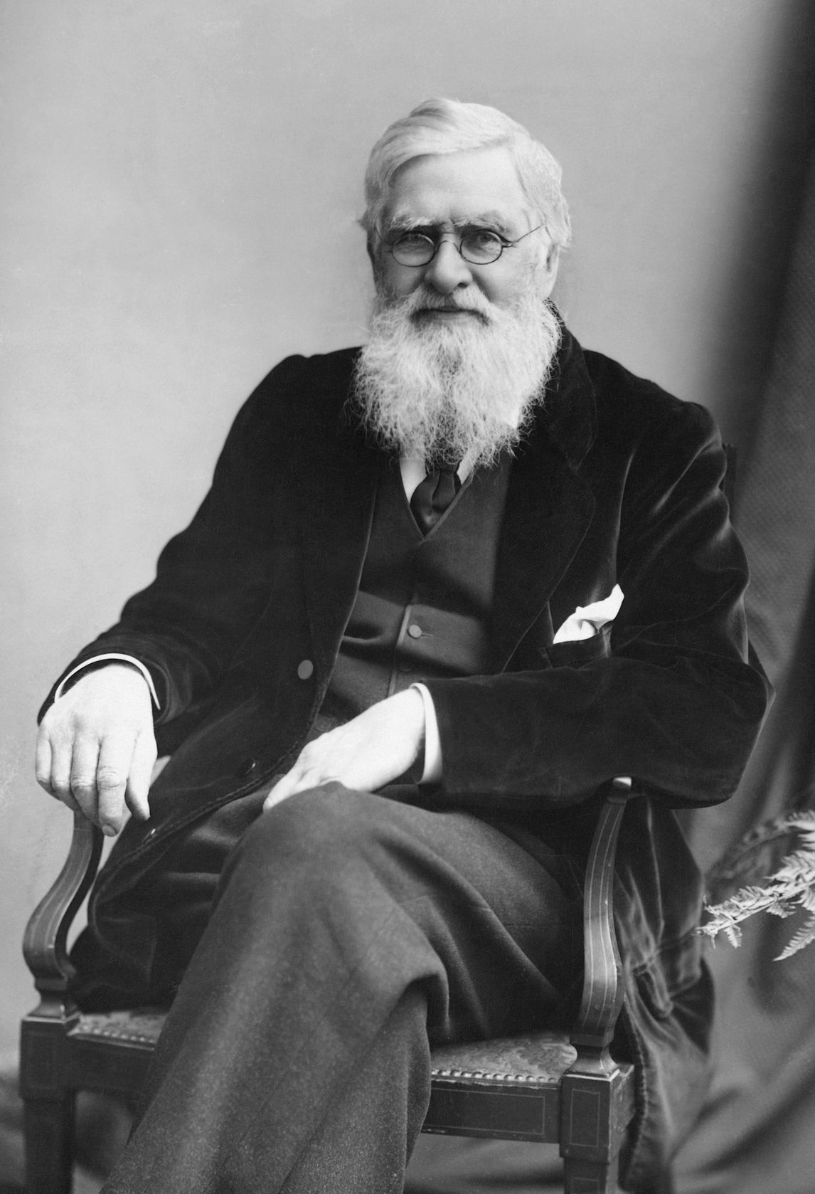 essay on darwin's theory